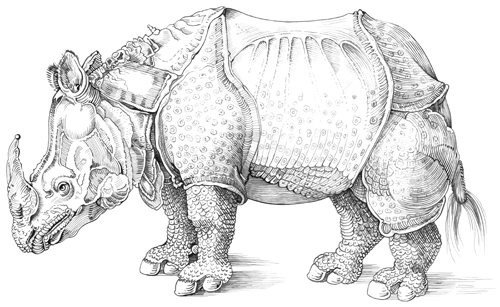 Line Drawing Rhino : Albrecht dürer brenda hoddinott